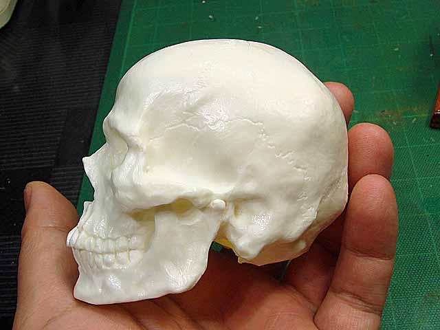 左はレベルのプラモデル頭蓋骨で、こちらも最近入手困難らしい。しかしご覧のとおり片桐氏の1/3モデルの方がディティールで勝る。このサイズでこれだけの造形の